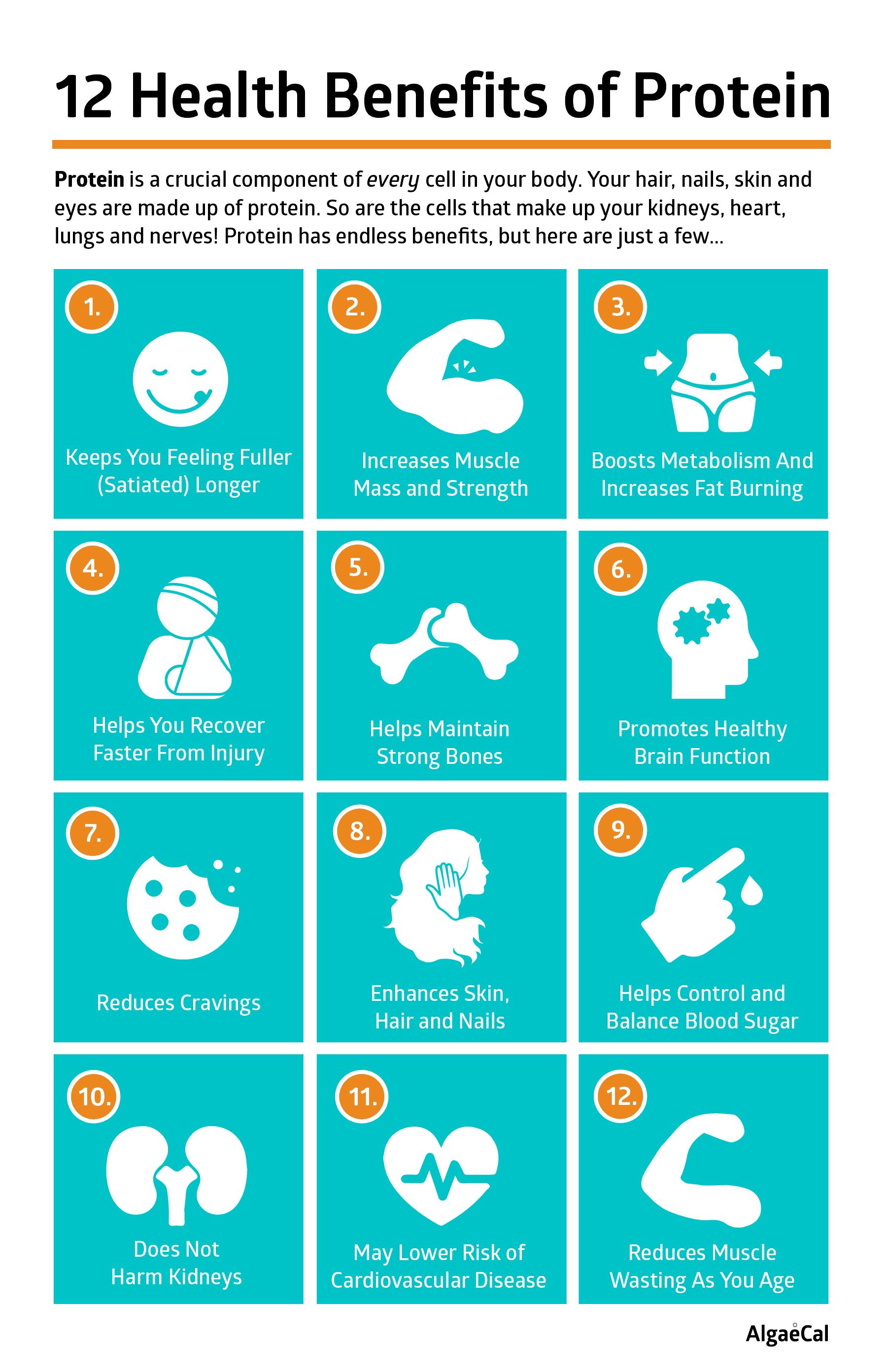 12 Health Benefits of Protein