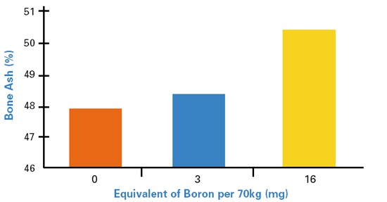 Boron and Vitamin D image 2