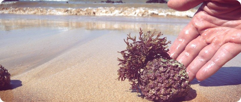 AlgaeCal Plant Calcium responsibility