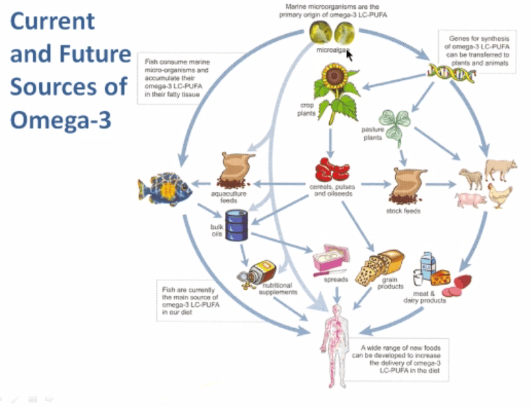 Future Sources of Omega 3s