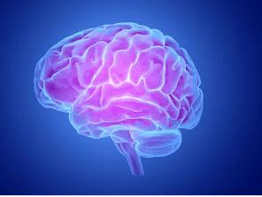Potassium Rich Foods for Brain function