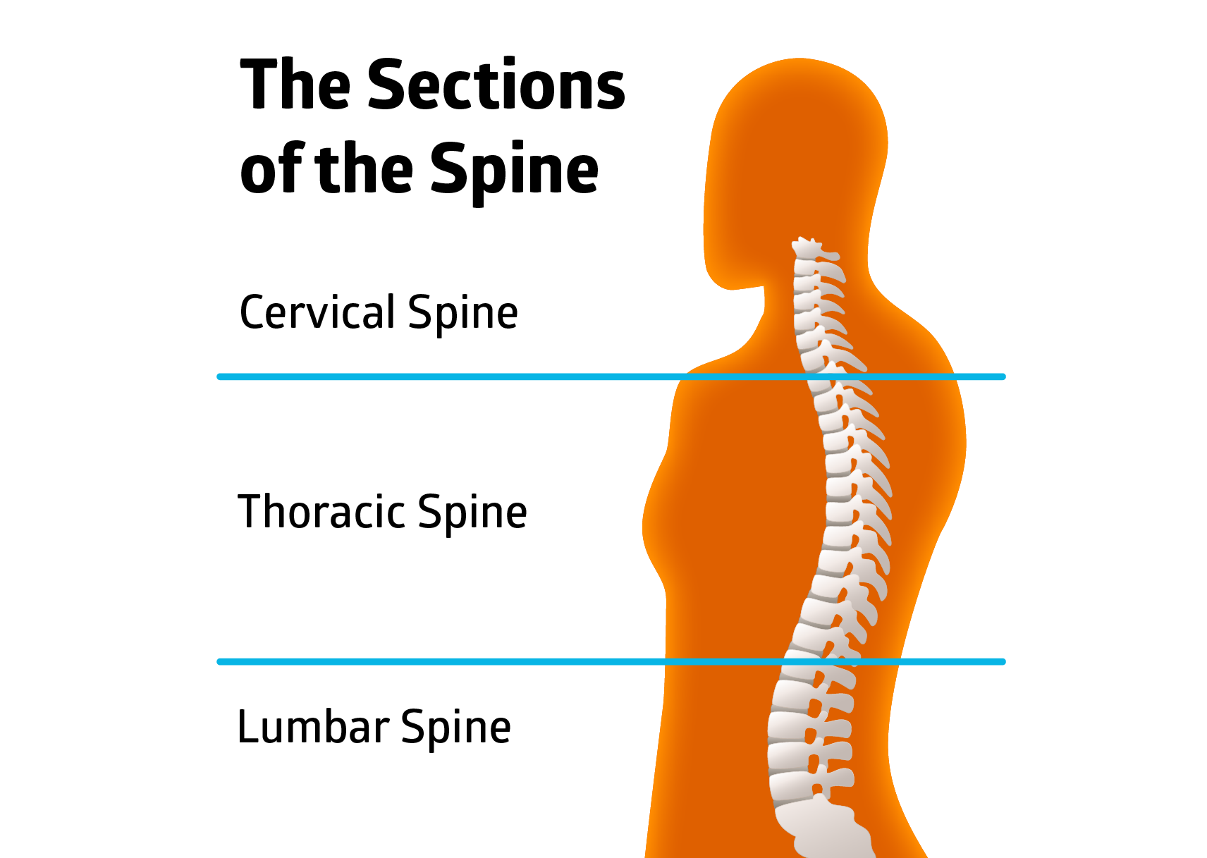Exercises for osteoporosis of the spine - the sections of the spine