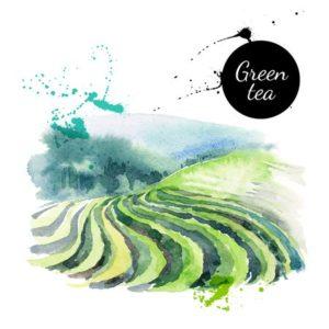 L-Theanine in green tea