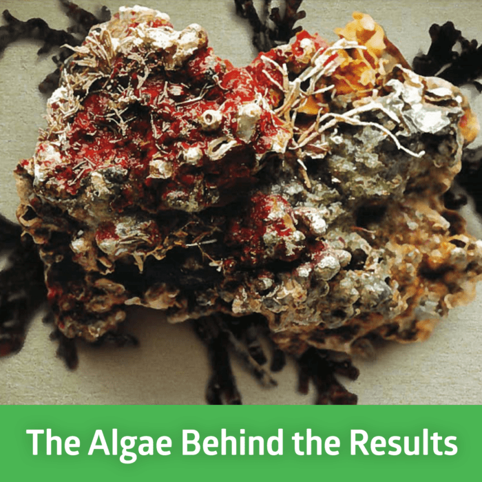 The Algae Behind the Results