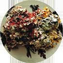 Algas Calcareas marine algae