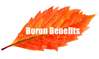 algaecal boron benefits for bone health