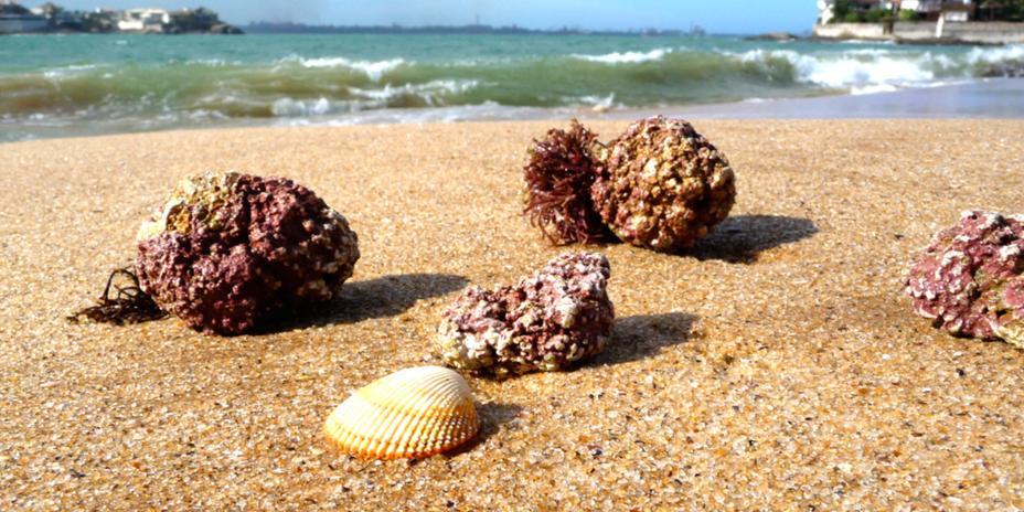 Algaecal on the beach