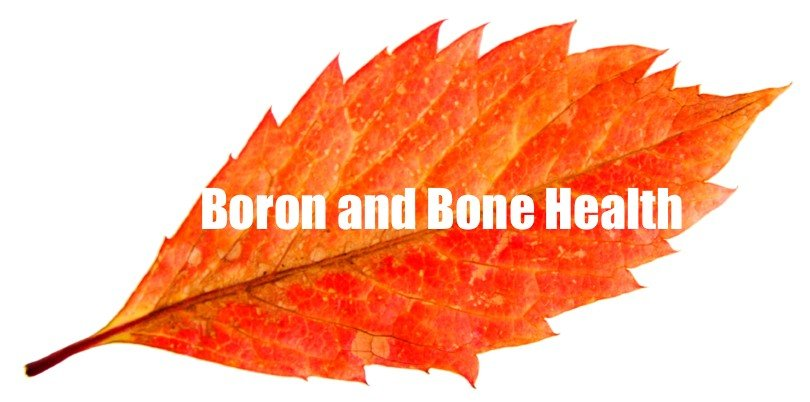 algaecal plant calcium boron bone health