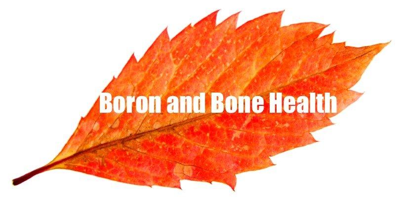 algaecal plant calcium boron bone health