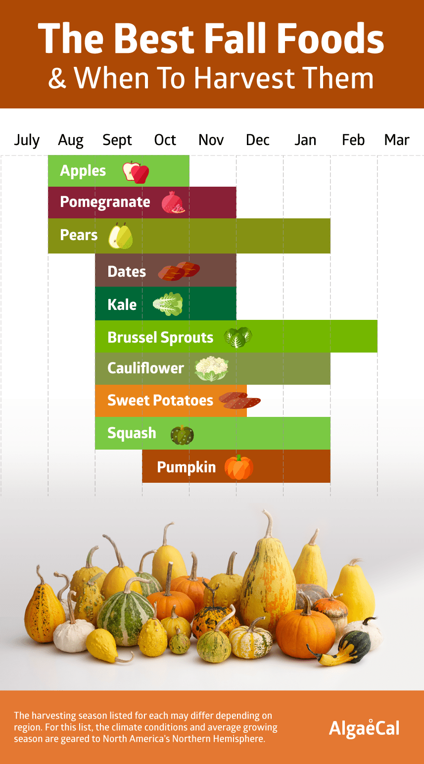 Top fall foods and their harvesting months