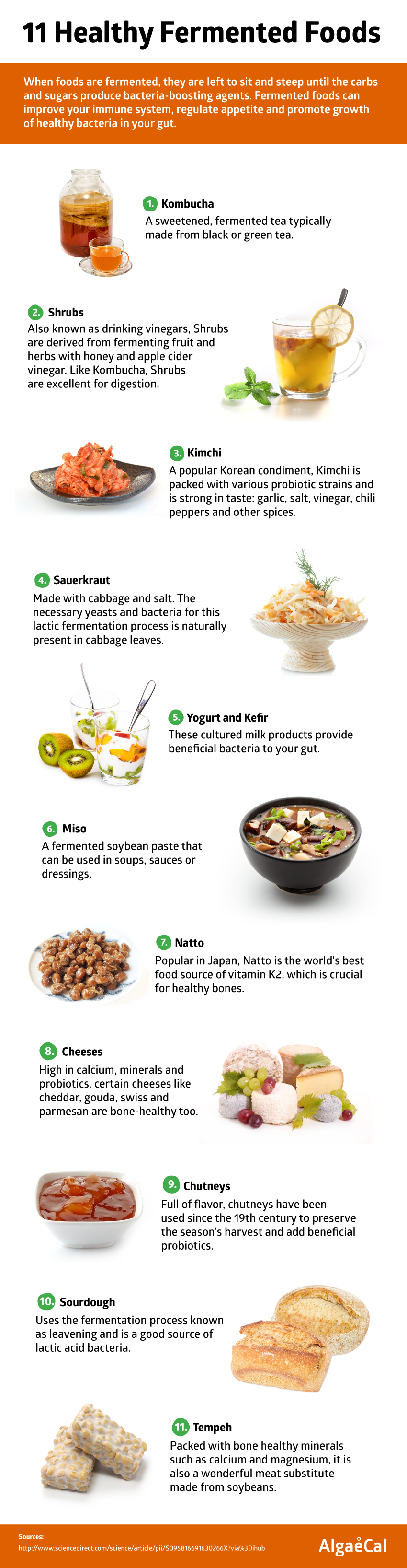 11 fermented foods infographic