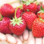 Two open hands holding fresh strawberries