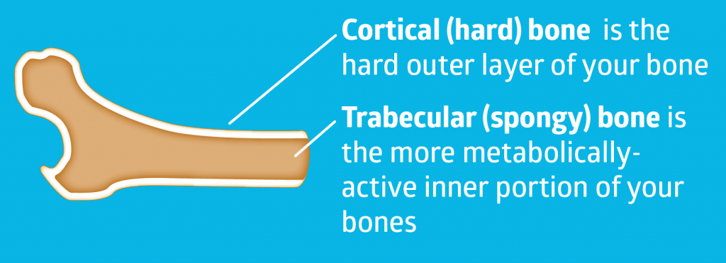 trabecular vs cortical