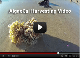 AlgaeCal Harvesting Video