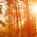 How to Boost Your Vitamin D This Winter