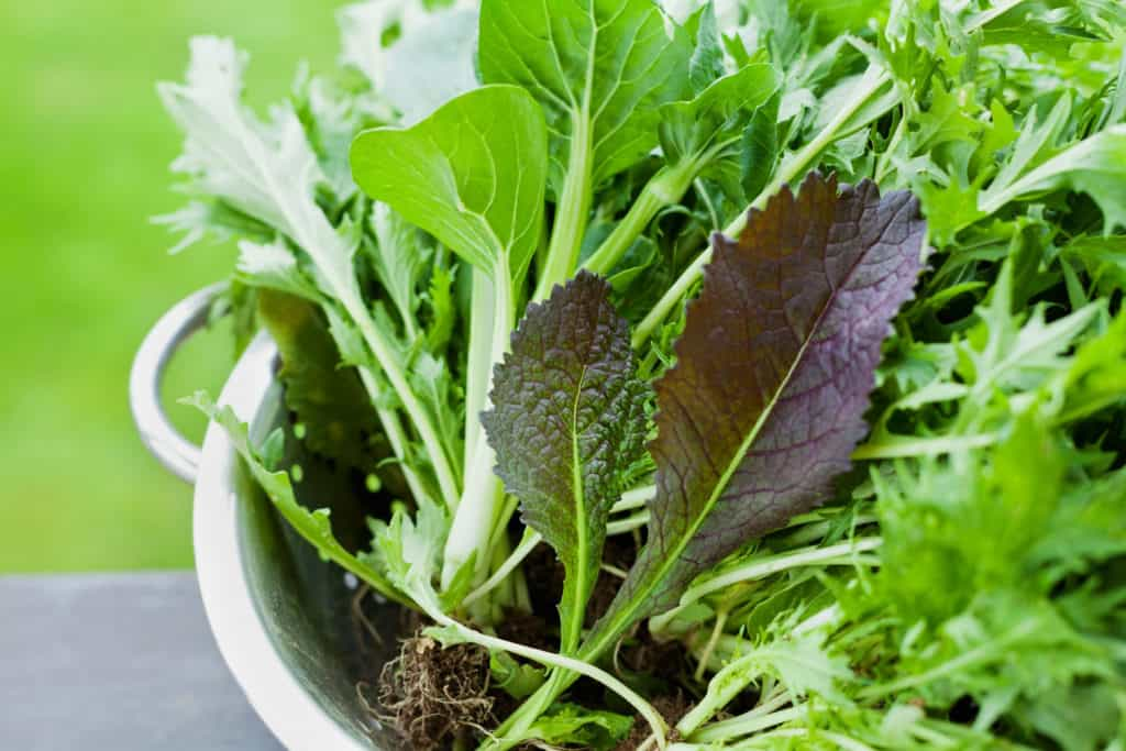 mustard greens as a calcium rich food
