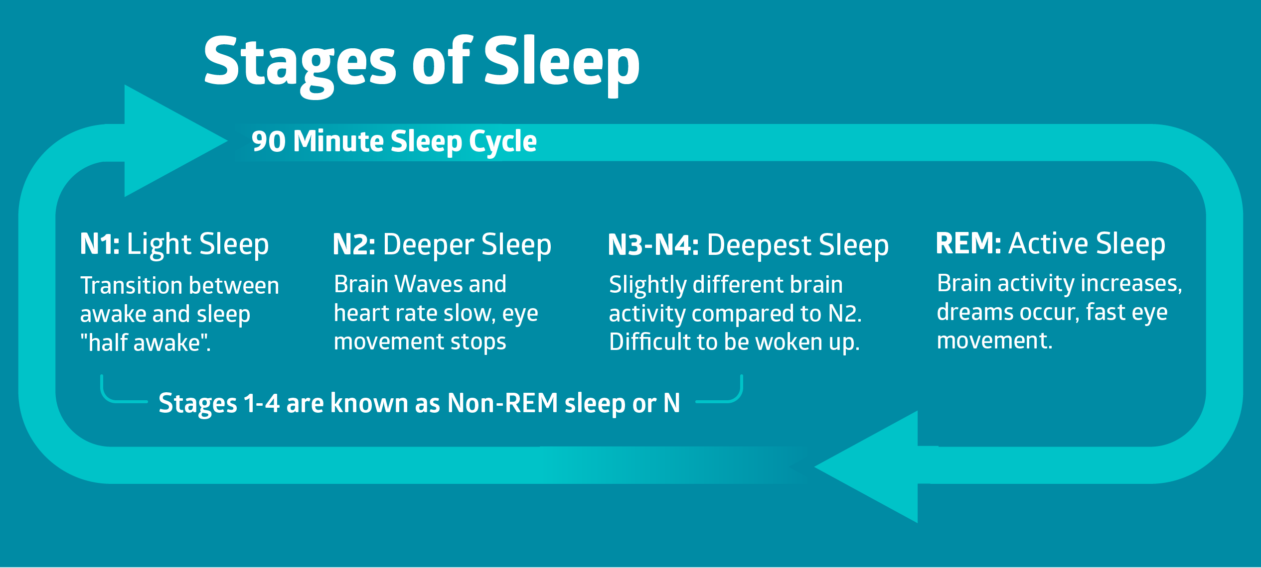 Stages of Sleep infographic